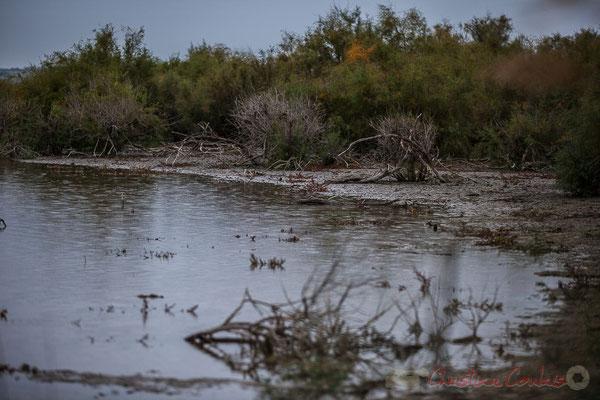 Marais aux tamaris. Réserve naturelle régionale de Scamandre, Vauvert