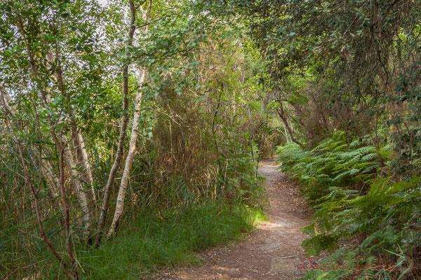 Rive de l'étang de Cousseau, Réserve naturelle...
