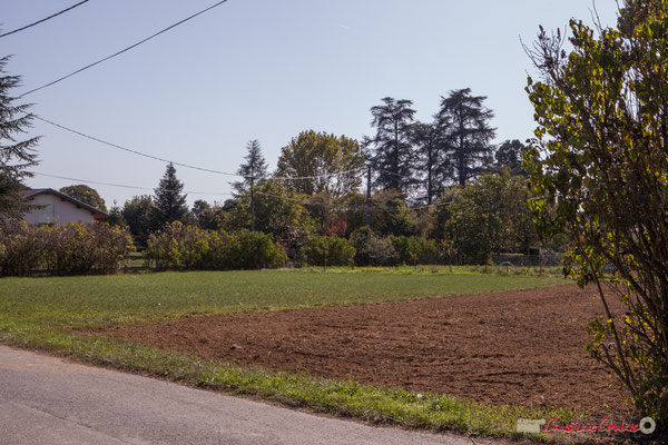 Allée du Garde, à l'horizon, les arbres du parc du domaine de Pau de Ciran, Cénac. 16/10/2017