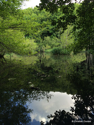 Le bayou de la Pimpine, face à l'étang des Sources. Latresne, Gironde