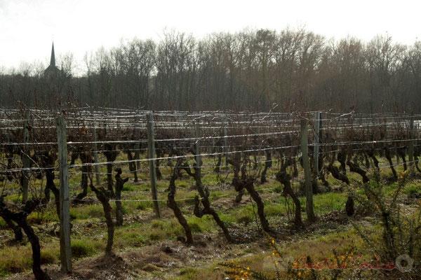 Vignoble sur Carignan-de-Bordeaux, l'église Saint-Martin de Carignan-de-Bordeaux en fond
