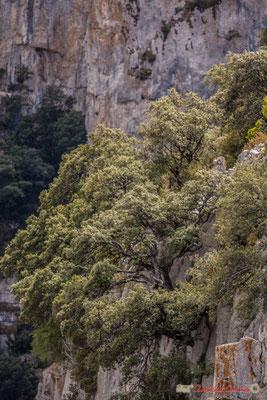 """""""S'enraciner 1"""" Belvédère d'Iso, Gorge de Arbaiun, Navarre / Belvedere de Iso, Foz de Arbaiun, Navarra"""