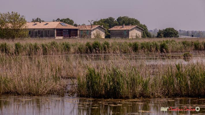 Retour au village Sans-Pain. Parcours de découverte de la roselière de l'Île Nouvelle, Gironde. 06/05/2018