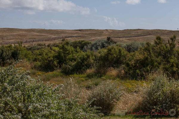 Derrière l'océan et la Grande Plage, les dunes maritimes bordent le Jaunay. Saint-Gilles-Croix-de-Vie, Vendée, Pays de la Loire