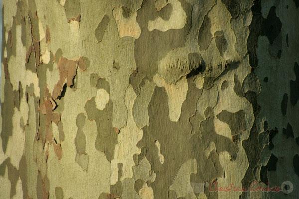 """Tree art I"". Le long du Canal latéral à la Garonne, Damazan"