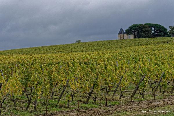Vignoble du Sauternais, Château d'Yquem, Sauternes. Samedi 10 octobre 2020. Photographie © Jean-Pierre Couthouis