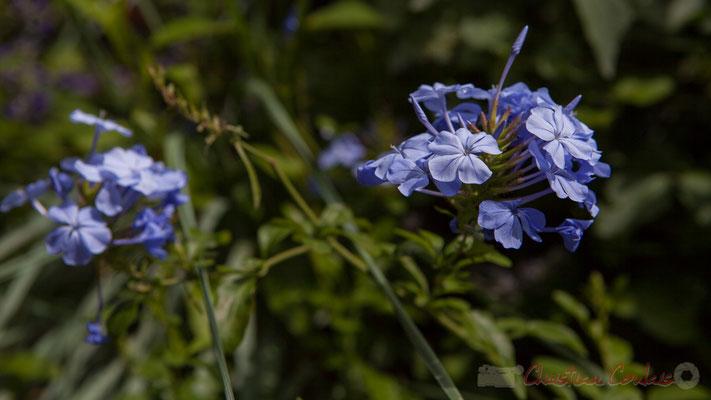Fleur Bleue; Nicolas Jomain, Boriana Tchonkova, architectes DPLG; Reka; France