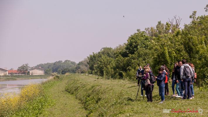 Un des groupes d'observateurs sur le parcours de découverte de la roselière de l'Île Nouvelle, Gironde. 06/05/2018