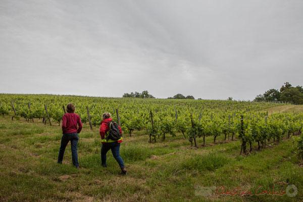 Vignoble du Château Brethous, Camblanes-et-Meynac. Randonnée pédestre Jazz360 2016, de Cénac à Quinsac, 12/06/2016