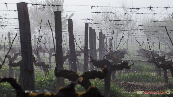 Vignobles du Château du Garde par temps de brouillard, Cénac. 3 avril 2017