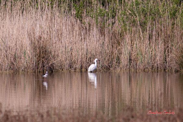 Echasse blanche et aigrette garzette. Réserve ornithologique du Teich. Samedi 3 avril 2021. Photographie © Christian Coulais