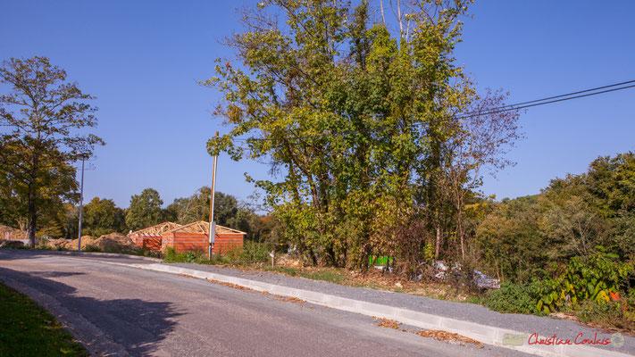 L'avenue du bois du moulin, avec en arrière plan l' clos du Petit Maître, Cénac, Gironde. 16/10/2017