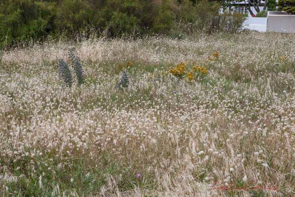 Végétation dunaire en bordure du Jaunay. Saint-Gilles-Croix-de-Vie, Vendée, Pays de la Loire