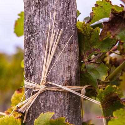 Attache traditionnelle en raffia; Vignoble du Sauternais, Château d'Yquem, Sauternes. Samedi 10 octobre 2020. Photographie © Christian Coulais