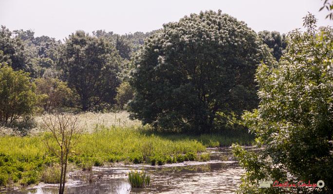 Parcours de découverte de la roselière de l'Île Nouvelle, Gironde. 06/05/2018