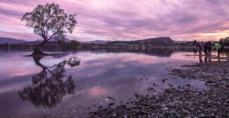 Fotografenmeute an Neuseelands bekanntesten Baum
