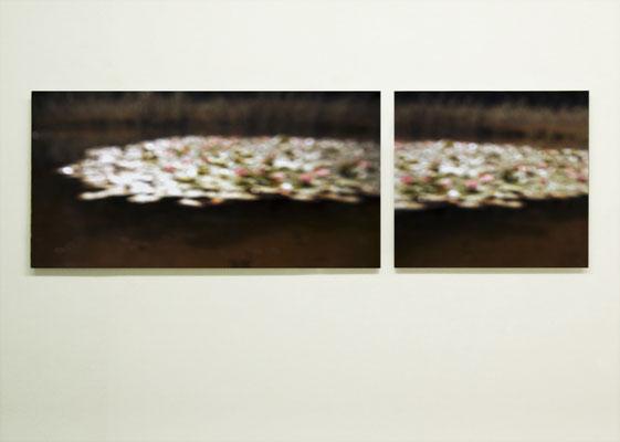 """""""Seerosen"""" Diptychon, 2014, Ausstellungsansicht, Köppe Contemporary, Berlin, 2014"""
