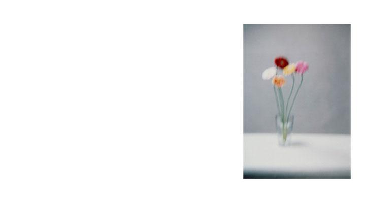 Blume 5, Füssen 2006