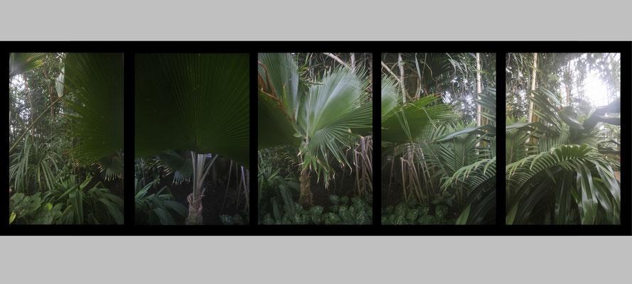 o.T.(Paradies), 2017 für Time Machine / Zeitmaschine, Botanischer Garten, Berlin