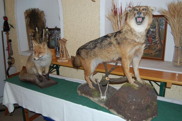 Bild: Goldschakal und Fuchs
