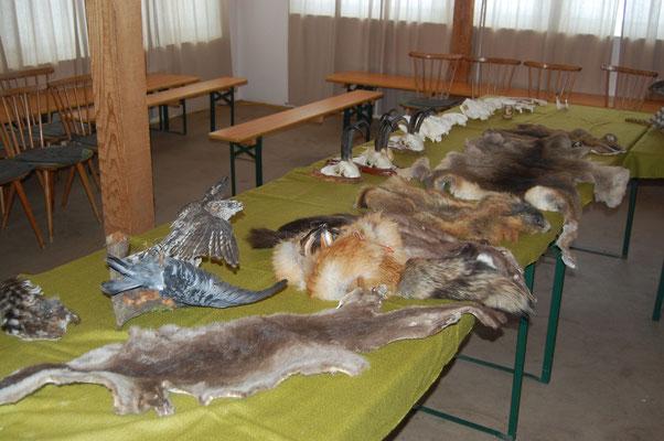 Bild: Auch verschiedenste Bälge liegen auf oder werden uns als Leihgabe zur Verfügung gestellt.