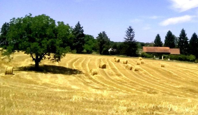 Le Clos Cosy - L'été en Périgord noir