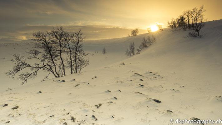Letzte Sonnenstrahlen, Dovrefjell Norwegen.