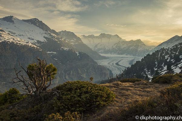 Grosser Aletschgletscher (CH). Bild-Nummer: 322