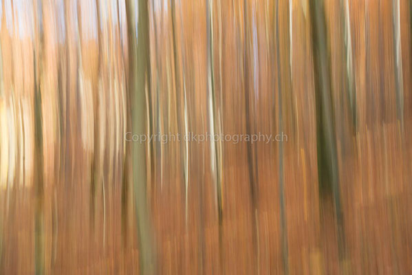 Spätherbst, aufgenommen im Naturpark Ermitage (CH). Bild-Nummer: 307