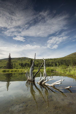 Wunderwerk Wurzel, Hatcher Pass Alaska Bild-Nummer: 81