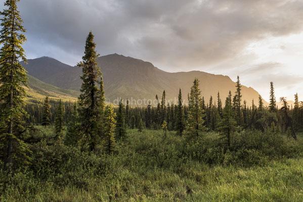 Wrangell-St.Elias Nationalpark Alaska 2 Bild-Nummer: 127