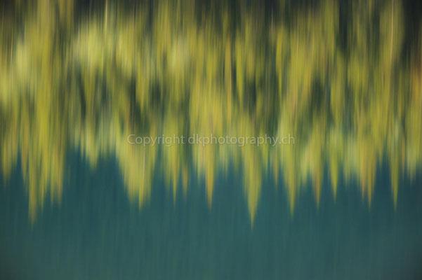 Tannenwald gespiegelt im türkisfarbenen Wasser, Kanada Bild-Nummer: 303