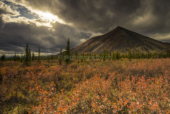 Indian Summer on Dempster Highway 3, Canada