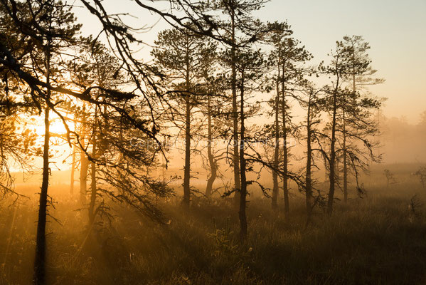 Ein neuer Tag erwacht, aufgenommen im Lahemaa-Nationalpark in Estland.