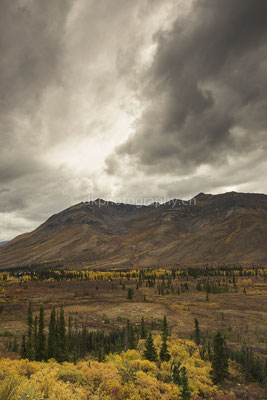 Indian Summer on Dempster Highway 1, Canada