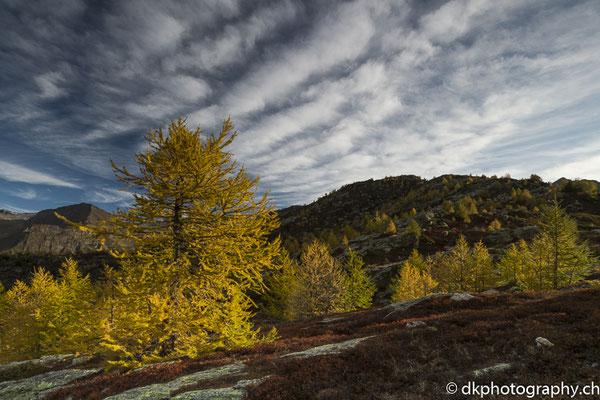 Herbst im Tessin (Ritomsee) 1. Bild-Nummer: 352