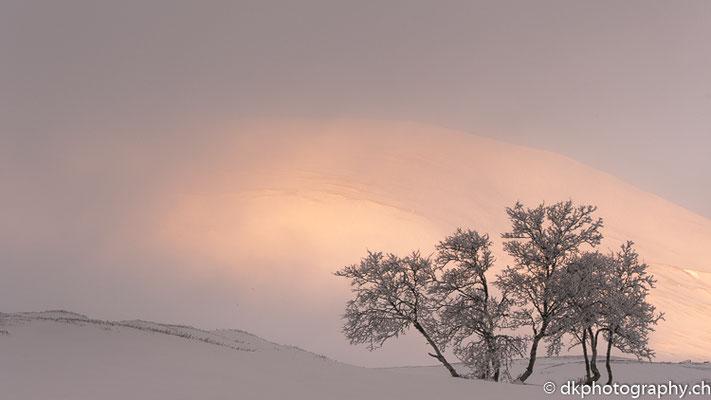 Der Nebel verschwindet, Dovrefjell Norwegen.