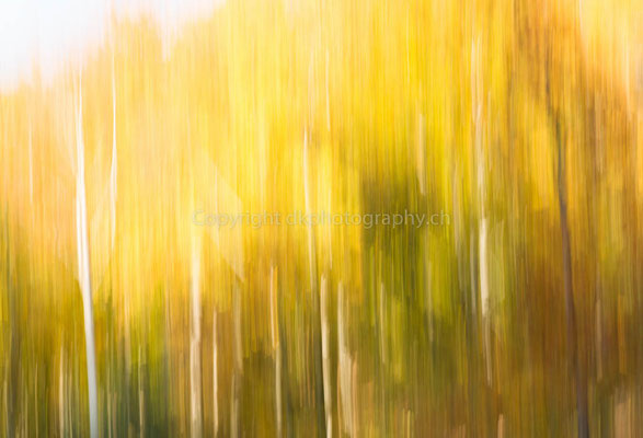 Herbstfarben, aufgenommen im Kanton Neuenburg (CH). Bild-Nummer: 304