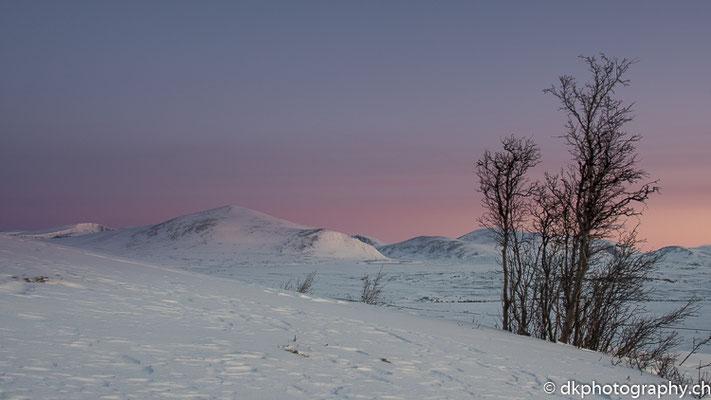 Morgenröte, Dovrefjell Norwegen.