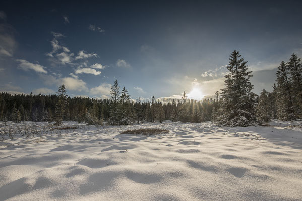 Das Moor im Winter, aufgenommen am Etang de la Gruère (CH).