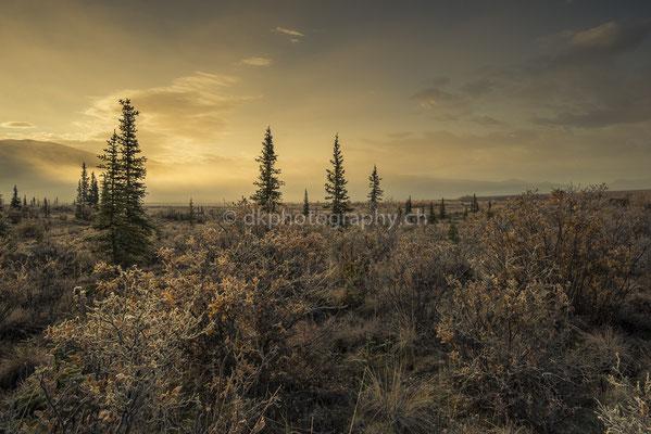 Dempster Highway 6, Canada Bild-Nummer: 64