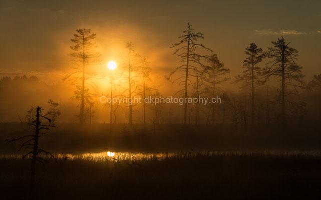 Sonnenaufgang im Lahemaa-Nationalpark in Estland.