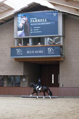 61. Blue Hors Farell - Reiterin Nana Merrald