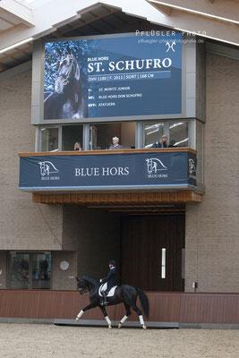 151. Blue Hors St. Schufro - Reiterin Nana Merrald