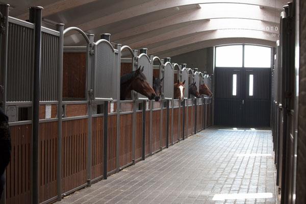 Helle, moderne Stallungen für Pferde bei Blue Hors Stables in Dänemark