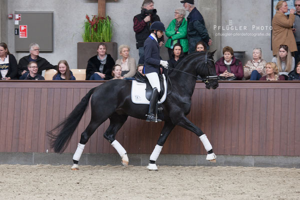 Blue Hors Kingston (Glock's Toto Jr. x Turbo Magic x Flemmingh) Trabverstärkung unter Reiter Christian Ruiz
