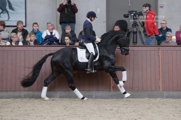 Blue Hors Kingston (Glock's Toto Jr. x Turbo Magic x Flemmingh) große Galoppade