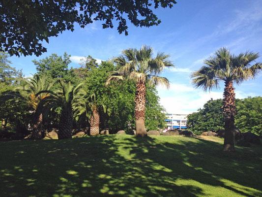 Le parc situé en face de la résidence