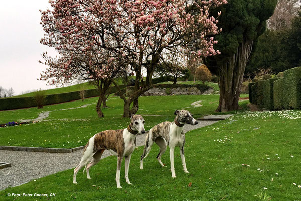 Milva und Enya im Schlosspark