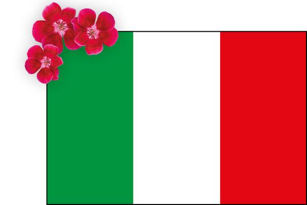 Webshop Italy